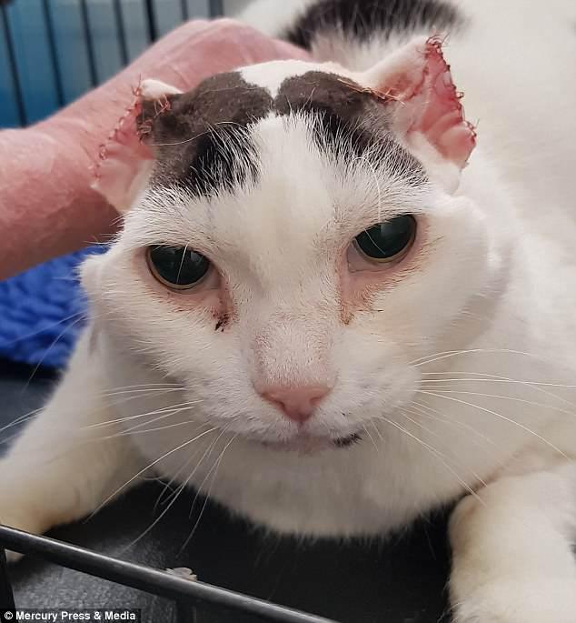 Белые кошки в опасности! Пинна грелась на солнышке, не зная, что нужно бежать... рис 5
