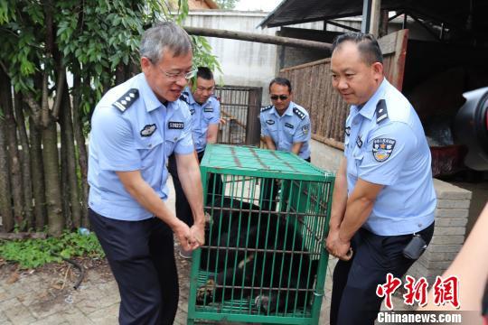 Собака-оборотень?! Китайцы купили щенка мастифа, а потом не поняли, что с ним произошло... рис 5