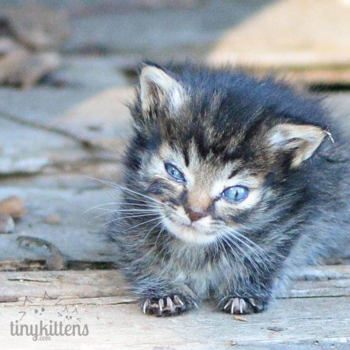"""""""Мы стали перед бульдозером, чтобы защитить малышей!"""" История котёнка, спасшего 60 пушистых душ рис 2"""