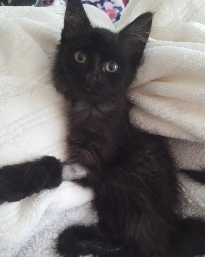 Чёрная кошка попала в беду! И вдруг полюбила рыжего кота в смешных карамельных разводах...) рис 2