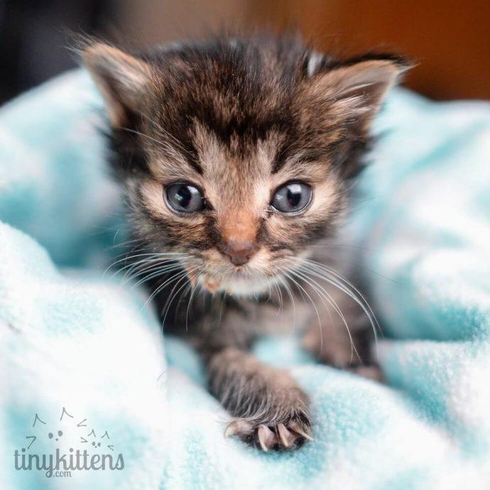 """""""Мы стали перед бульдозером, чтобы защитить малышей!"""" История котёнка, спасшего 60 пушистых душ рис 7"""