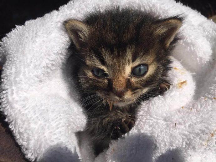 """""""Мы стали перед бульдозером, чтобы защитить малышей!"""" История котёнка, спасшего 60 пушистых душ рис 3"""