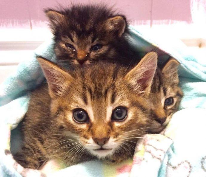 """""""Мы стали перед бульдозером, чтобы защитить малышей!"""" История котёнка, спасшего 60 пушистых душ рис 5"""