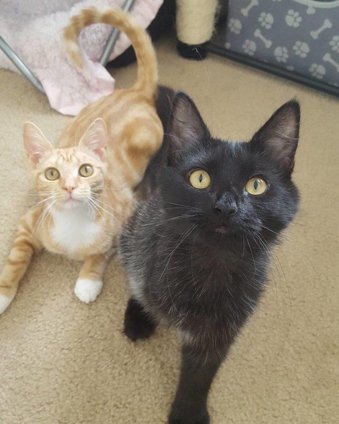 Чёрная кошка попала в беду! И вдруг полюбила рыжего кота в смешных карамельных разводах...) рис 6