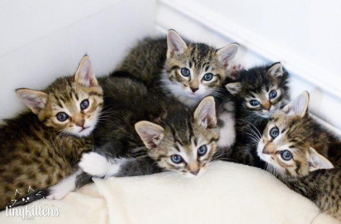 """""""Мы стали перед бульдозером, чтобы защитить малышей!"""" История котёнка, спасшего 60 пушистых душ рис 6"""