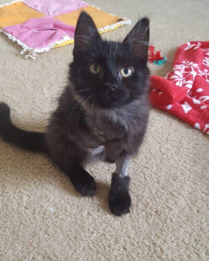 Чёрная кошка попала в беду! И вдруг полюбила рыжего кота в смешных карамельных разводах...) рис 3
