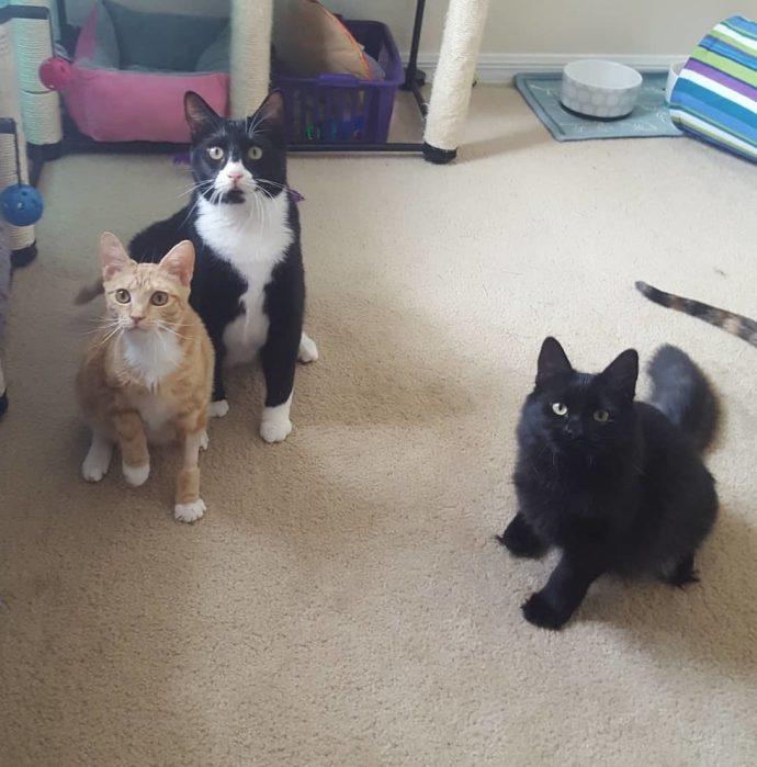 Чёрная кошка попала в беду! И вдруг полюбила рыжего кота в смешных карамельных разводах...) рис 5