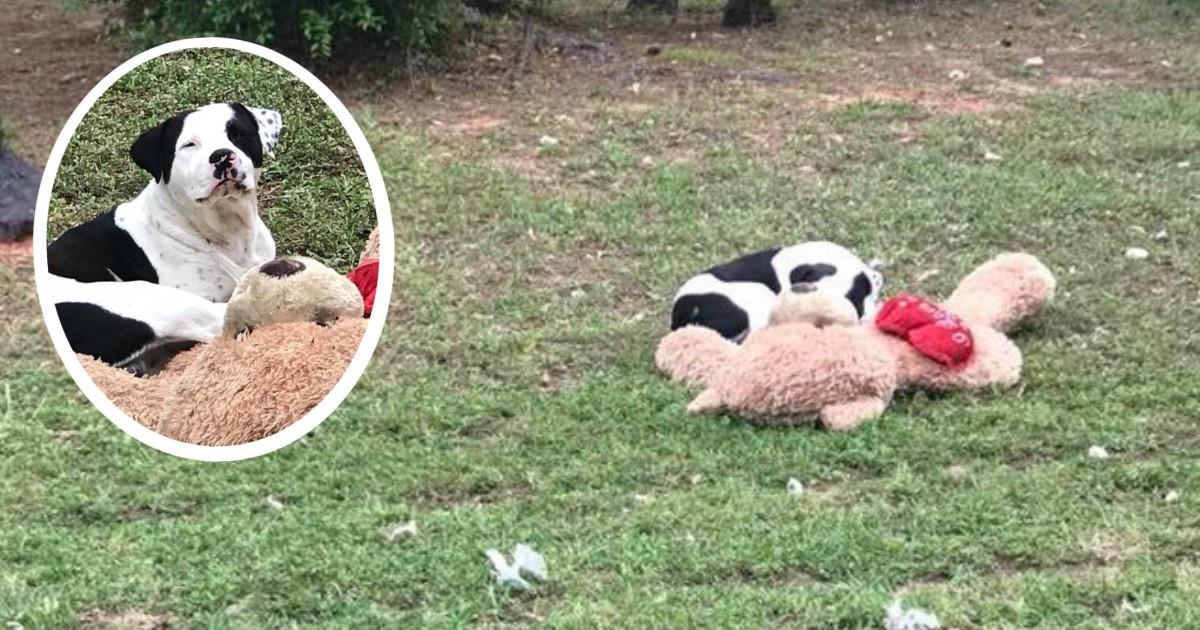 Уличный пёс обнимал плюшевого мишку... Он не двигался - и волонтер поняла, что опоздала! рис 8