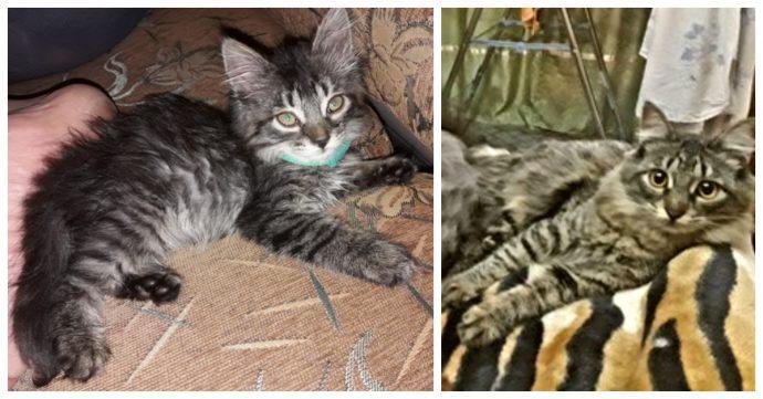 """""""Красивые кошки в страшной квартире... Хочу это забыть!"""" + 10 фото красивых спасённых котов рис 9"""