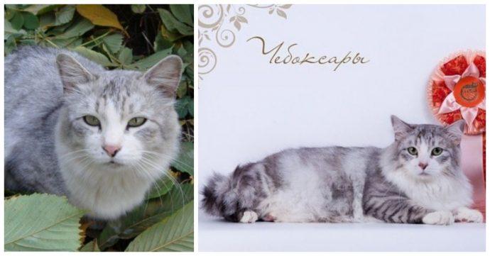 """""""Красивые кошки в страшной квартире... Хочу это забыть!"""" + 10 фото красивых спасённых котов рис 16"""