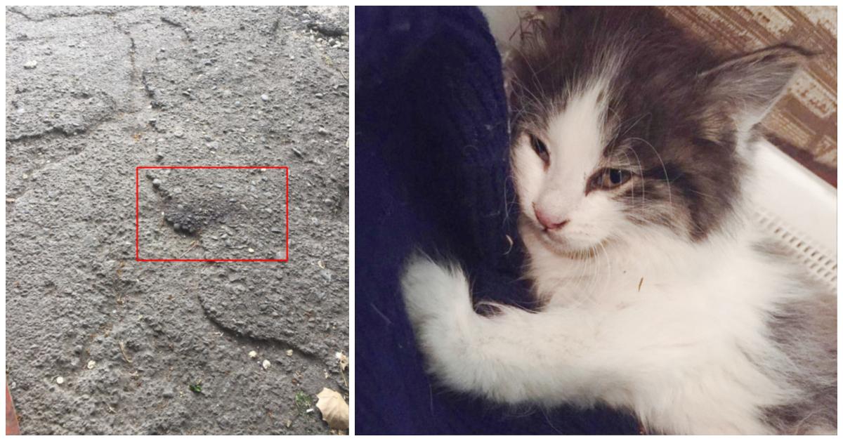 Котёнок в красных пятнах лежал у порога. Парень повёз усыпить страдальца... и привёз обратно!) рис 9