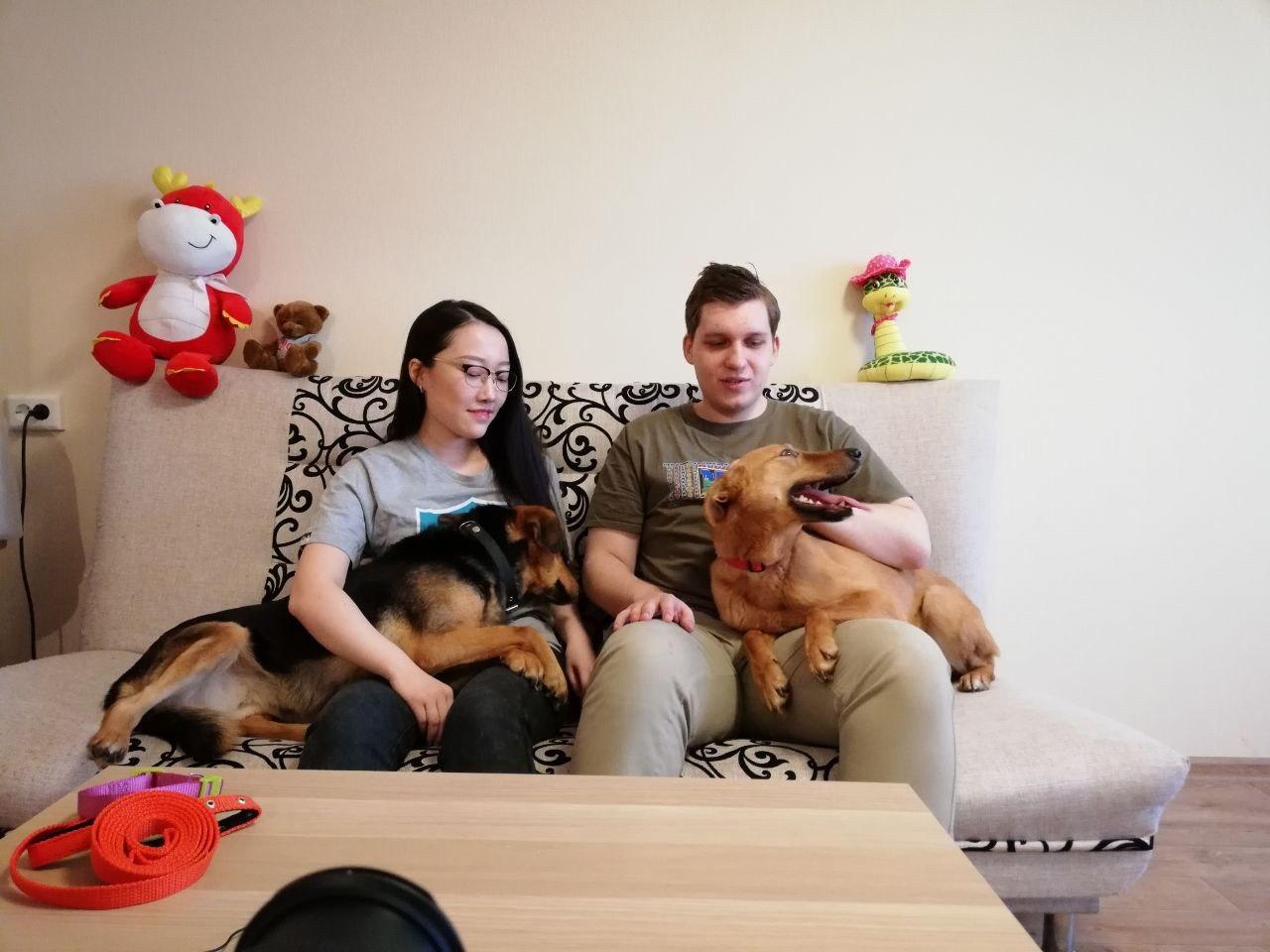 Интернациональная любовь! Как Иван и Гуанси приютили двух приютских собак ) рис 2