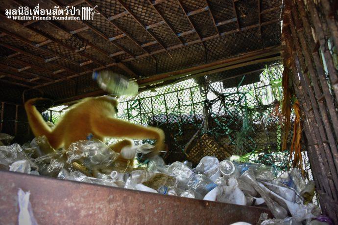 Золотистый ребёнок жил в мешке мусора 10 лет! Его владельцы вызвали спасателей от отчаяния... рис 7