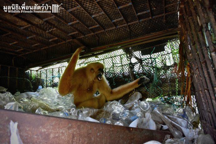 Золотистый ребёнок жил в мешке мусора 10 лет! Его владельцы вызвали спасателей от отчаяния... рис 6