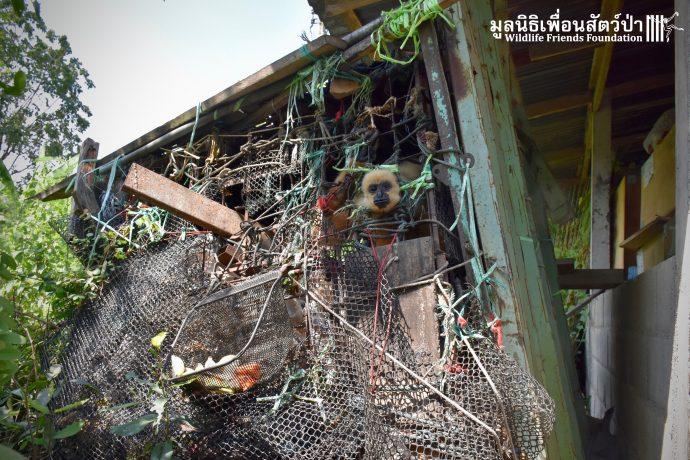 Золотистый ребёнок жил в мешке мусора 10 лет! Его владельцы вызвали спасателей от отчаяния... рис 10
