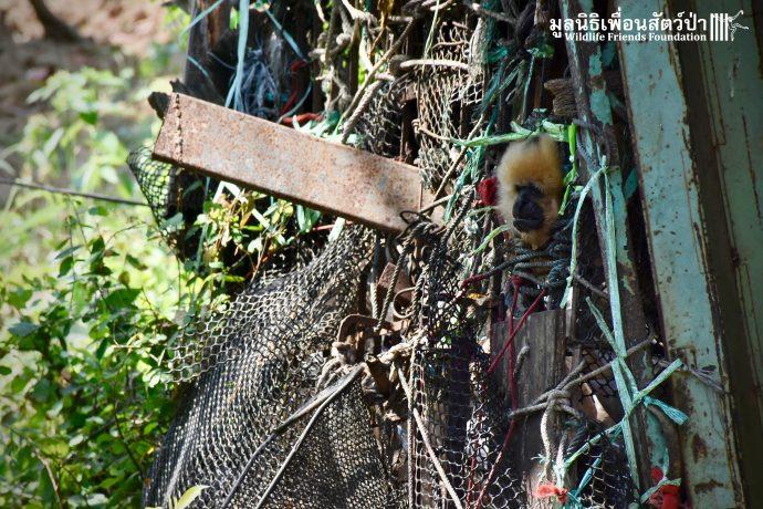 Золотистый ребёнок жил в мешке мусора 10 лет! Его владельцы вызвали спасателей от отчаяния... рис 11