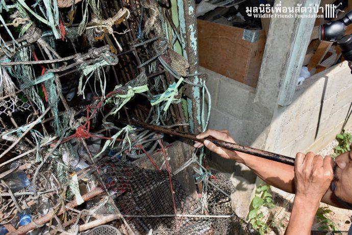 Золотистый ребёнок жил в мешке мусора 10 лет! Его владельцы вызвали спасателей от отчаяния... рис 14