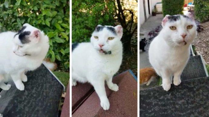 Белые кошки в опасности! Пинна грелась на солнышке, не зная, что нужно бежать... рис 4