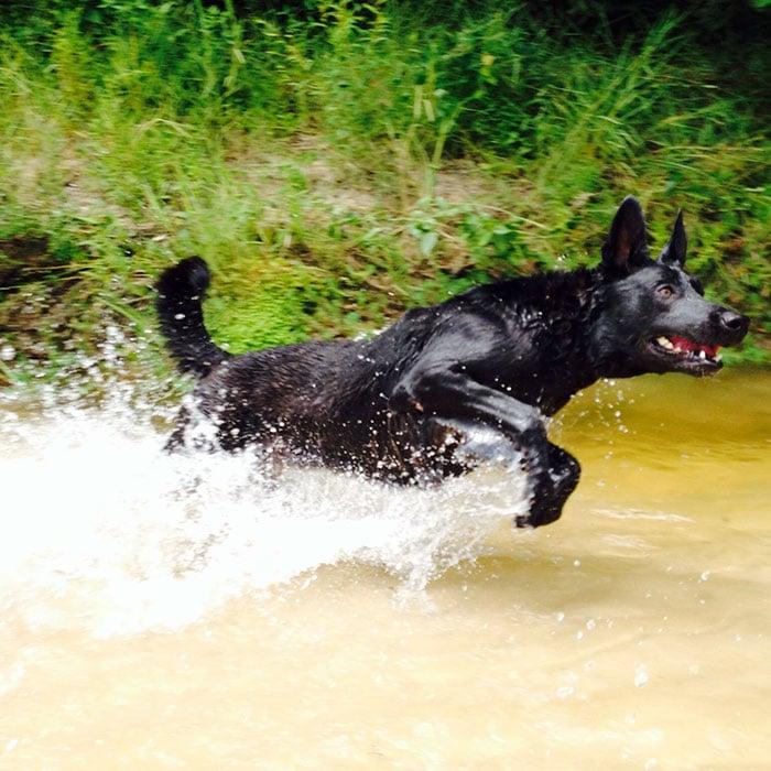 dog-rescue-policeman-gang-attact-lucas-todd-frazier-5ae6ebf26e3a2__700