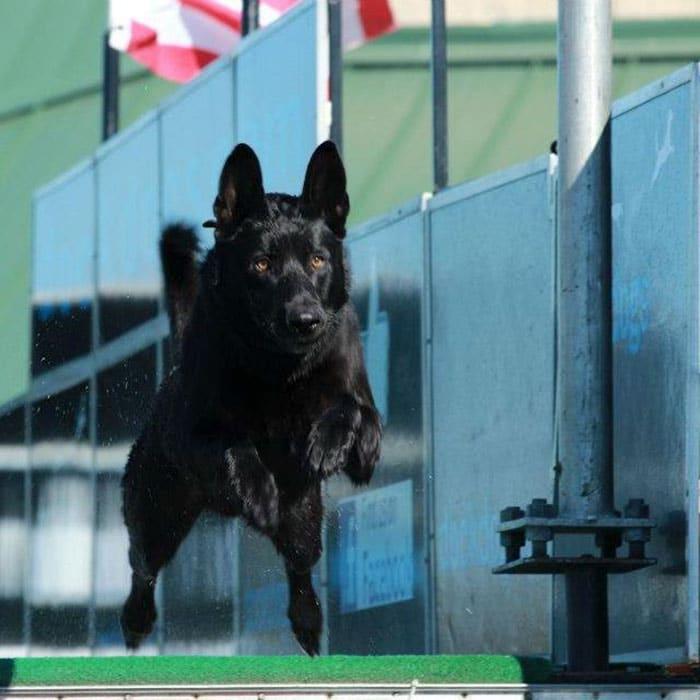 dog-rescue-policeman-gang-attact-lucas-todd-frazier-5ae6ebf656e0b__700