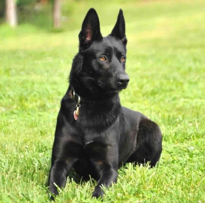 dog-rescue-policeman-gang-attact-lucas-todd-frazier-5ae6faeea7e69__700