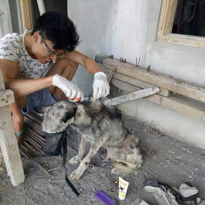 malnourished-husky-nursed-back-rico-soegiarto-bali-4-5af2da46707d3__700