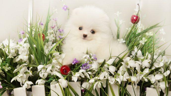Белые кошки в опасности! Пинна грелась на солнышке, не зная, что нужно бежать... рис 8