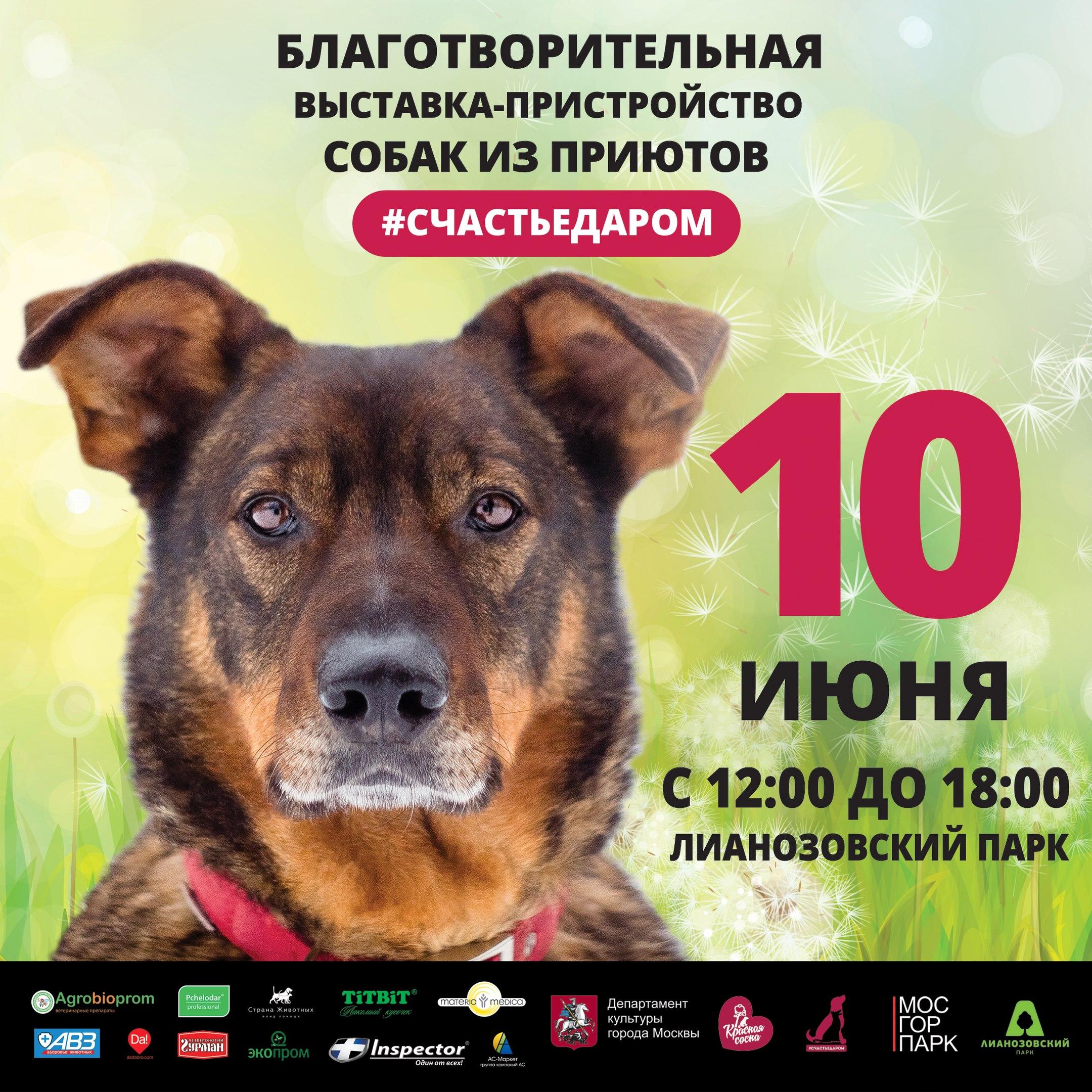 Выставка-пристройство собак из приюта, г. Москва! 10 июня приходим в парк - за счастьем)