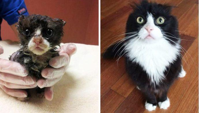 """""""Красивые кошки в страшной квартире... Хочу это забыть!"""" + 10 фото красивых спасённых котов рис 12"""