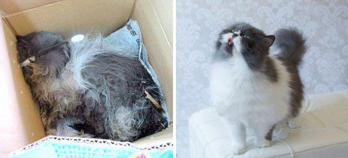 """""""Красивые кошки в страшной квартире... Хочу это забыть!"""" + 10 фото красивых спасённых котов рис 7"""