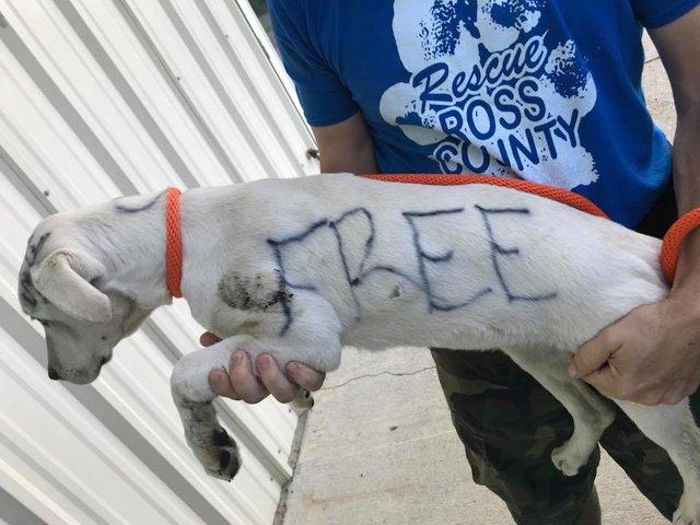 """""""Ничья! Подарок свыше..."""" Кто-то маркером написал на собаке послание - и бросил её в парке! рис 3"""