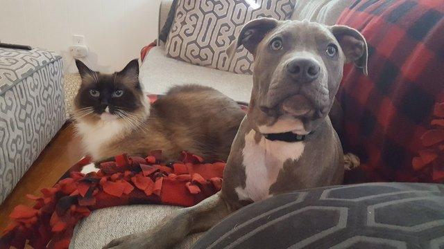 2 больных щенка превратились в красавчиков всего за месяц! Их судьба теперь решена... рис 9