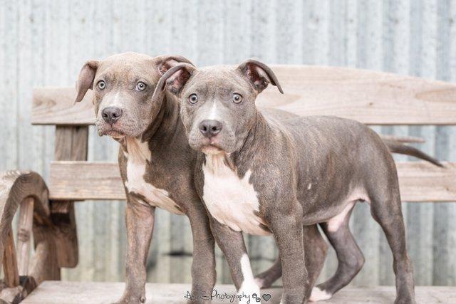 2 больных щенка превратились в красавчиков всего за месяц! Их судьба теперь решена... рис 6