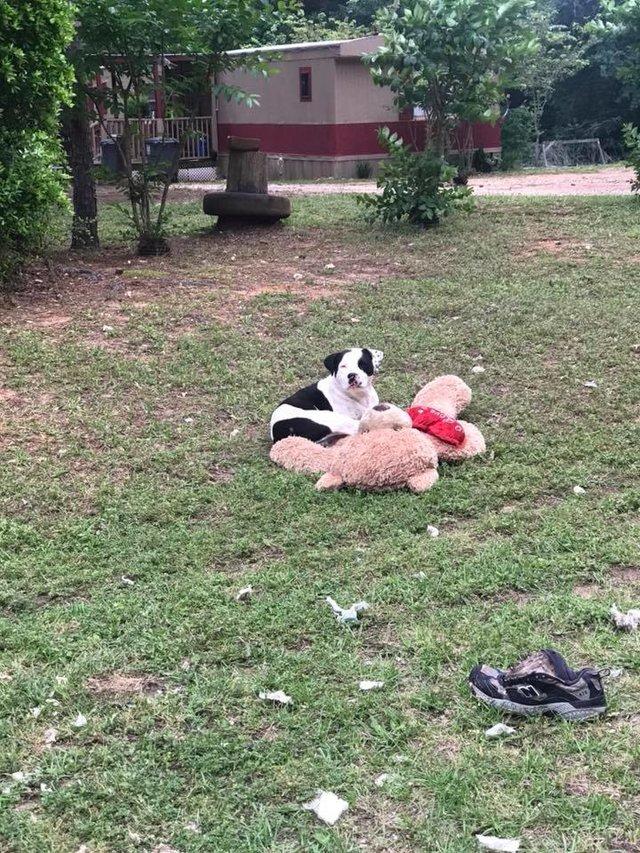 Уличный пёс обнимал плюшевого мишку... Он не двигался - и волонтер поняла, что опоздала!