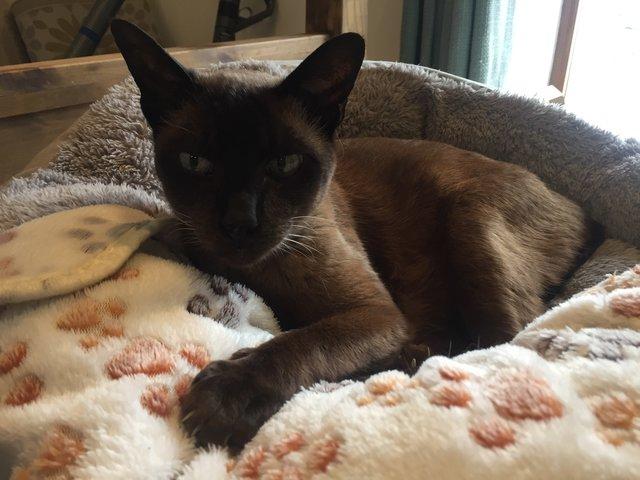 """""""Красивые кошки в страшной квартире... Хочу это забыть!"""" + 10 фото красивых спасённых котов рис 5"""