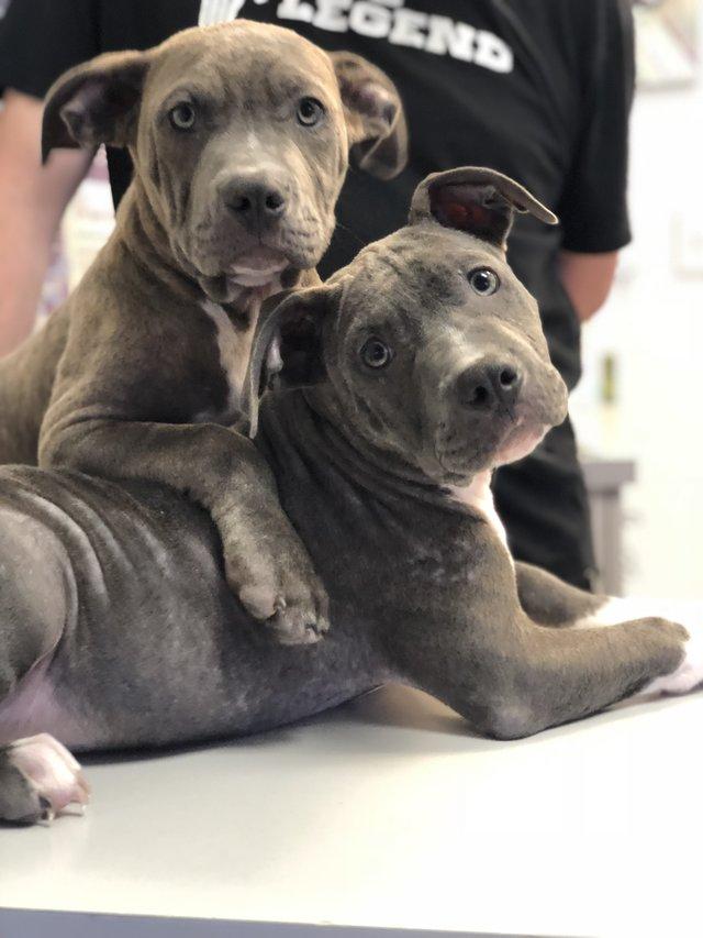 2 больных щенка превратились в красавчиков всего за месяц! Их судьба теперь решена... рис 7