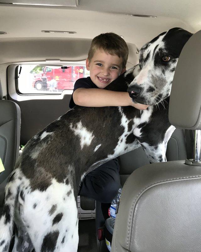 """""""Это не собака, а лошадь!"""" Мальчик придумал план - как взять в приюте самого большого пса! рис 4"""