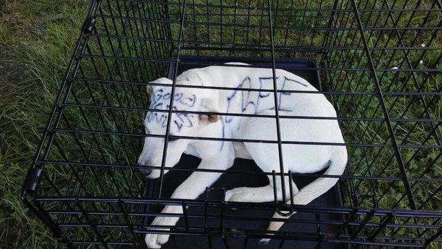 """""""Ничья! Подарок свыше..."""" Кто-то маркером написал на собаке послание - и бросил её в парке!"""