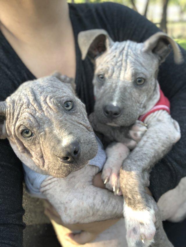 2 больных щенка превратились в красавчиков всего за месяц! Их судьба теперь решена... рис 5