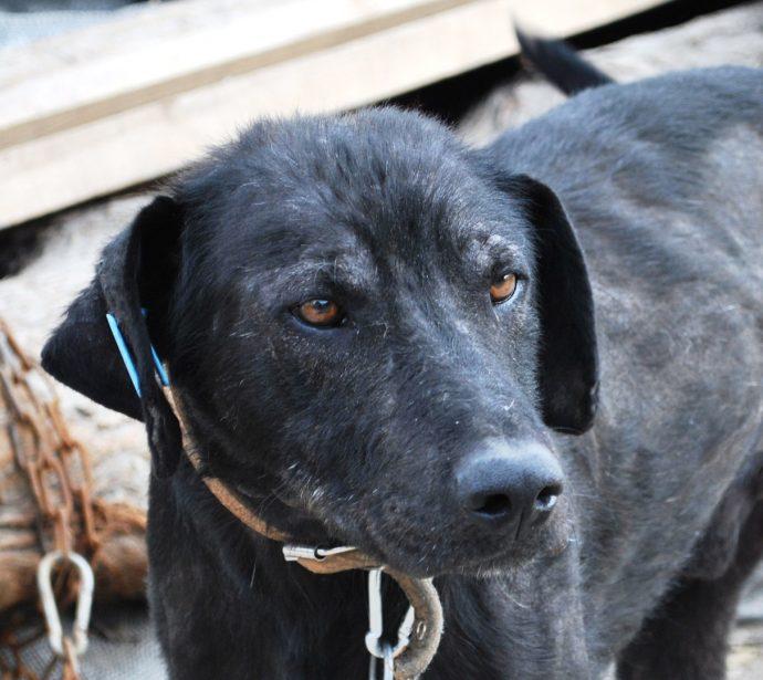 Изгой среди людей и собак: Ромка и его трудный путь к исцелению! рис 9