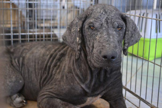 Изгой среди людей и собак: Ромка и его трудный путь к исцелению! рис 5