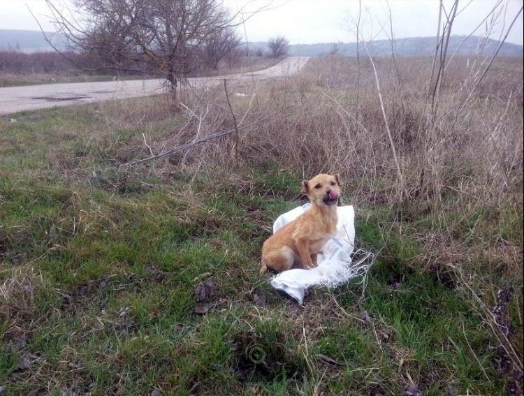 """""""Мешок катился по степи... """" 3 истории о щенках, найденных в поле!"""