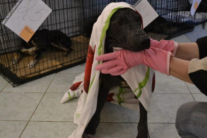 Изгой среди людей и собак: Ромка и его трудный путь к исцелению! рис 3