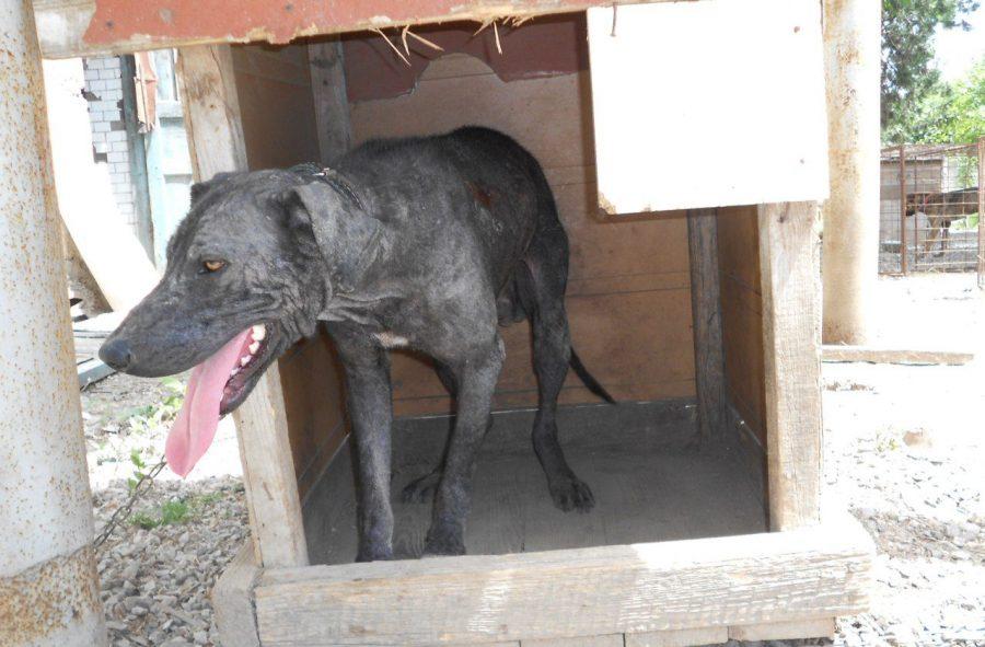 Изгой среди людей и собак: Ромка и его трудный путь к исцелению! рис 7