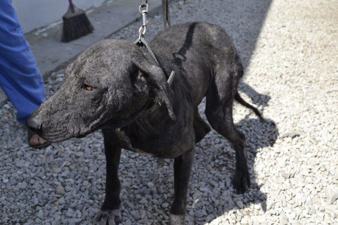 Изгой среди людей и собак: Ромка и его трудный путь к исцелению! рис 6