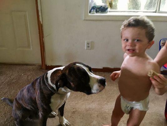 ребенок и собака рис 2