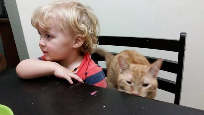 Вы никогда не видели такого котёнка! У него есть всего 1 коготь, чтобы хватать свою удачу... рис 11