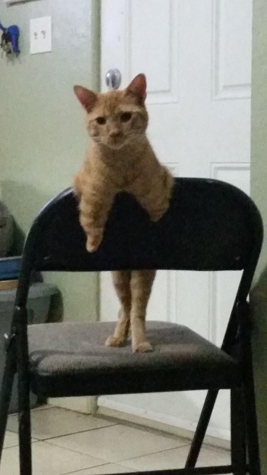 Вы никогда не видели такого котёнка! У него есть всего 1 коготь, чтобы хватать свою удачу... рис 5