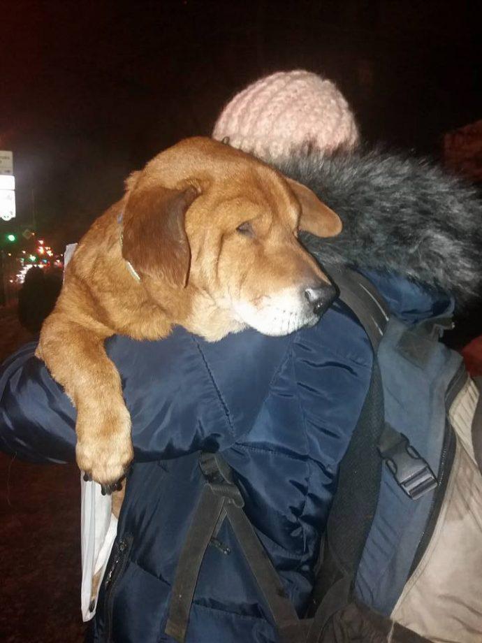 В Киеве выбросили замерзать на улицу слепого старичка Биги...