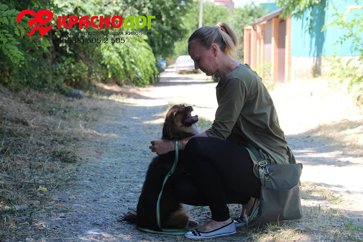 Призвание помогать: волонтёр Виктория – лучший друг собачек из приюта! рис 3